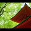 新緑×参道 < 03 >