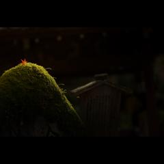 秋のぶらり京都 19