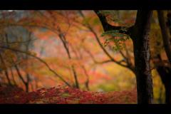 秋のぶらり京都 06