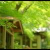 新緑の候 。