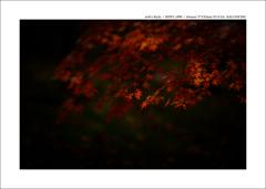 京都 | 秋の旅路  08
