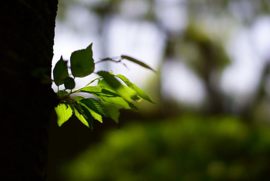 木陰から… 1