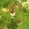 蝶 チョウ