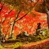浮雲園地の紅葉