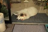 入り口で寝るココちゃん