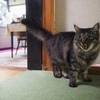 丸い目の猫
