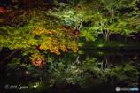 紅葉夜景トライ