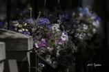 浮かび上がる花たち