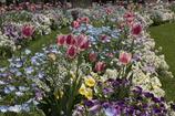 春の花壇は賑やかですね!
