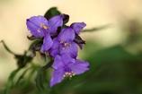 野に咲く花(2)