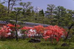 奥に見えますのは姫路城でございます~♪