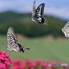 蝶よ、花よ