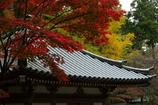 秋色のお寺
