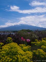 富士山と色とりどりの花たち