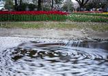 桜の花びらぐーるぐる◎