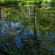 水面(みなも)に映える新緑