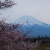 富士山 & 桜