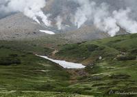 CANON Canon EOS 5D Mark IVで撮影した(高山植物・旭岳)の写真(画像)