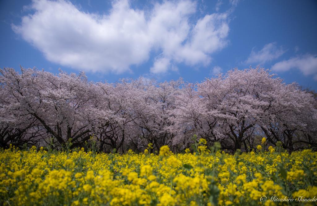 春色のかほり