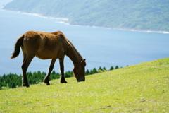 海と山と馬(ほぼ野生)