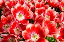 一足お先に春の花3