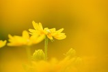 夏色の花2