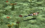 夏のモネの池2