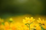 夏色の花3