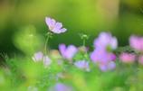 秋に咲く花2
