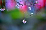 春と秋の約束