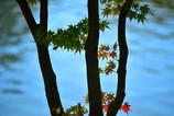 秋もすぐそこ2