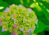 花開く時2