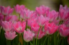 一足お先に春の花4