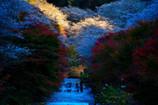 四季の回廊2