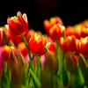 春の足音。。