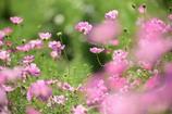 秋に咲く花3