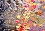 秋も終わりの頃