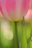 一足お先に春の花6