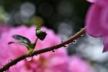 秋雨の日1