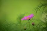 秋に咲く花1