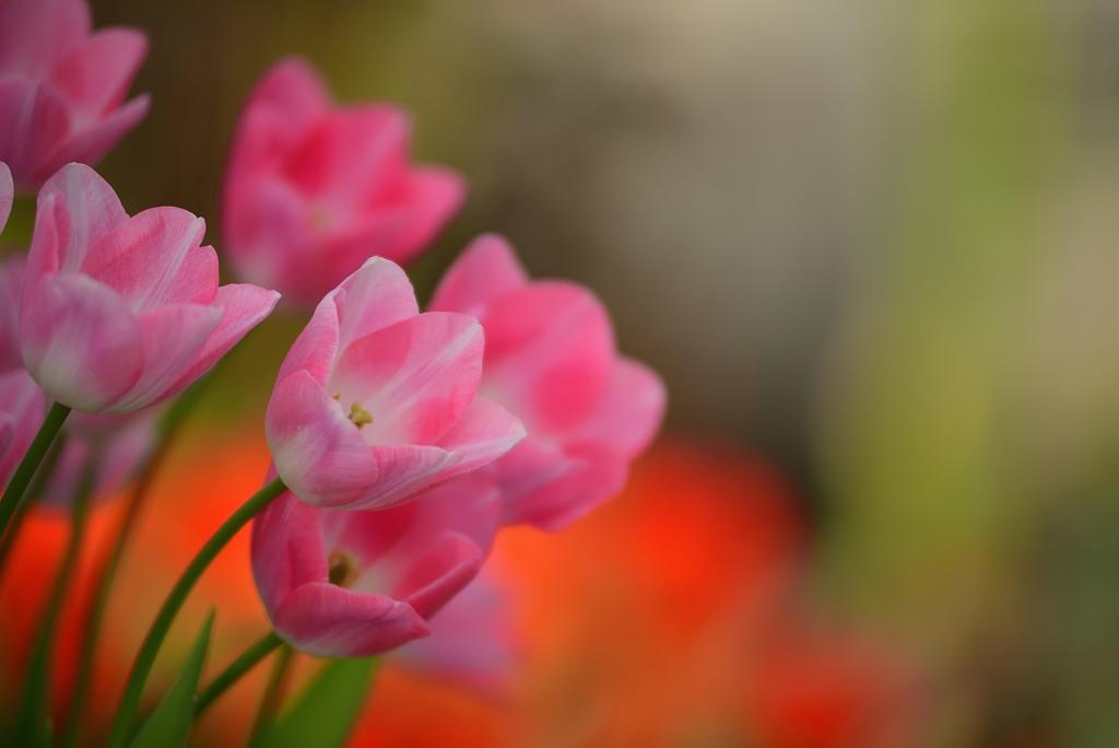 一足お先に春の花2