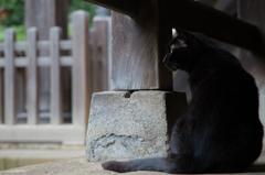 白山神社にて8 -雨宿り-