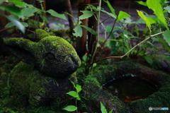 緑のうさぎ