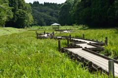 昭和の森でウォーキング 9
