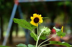 夏の千葉公園に健気に咲く花3