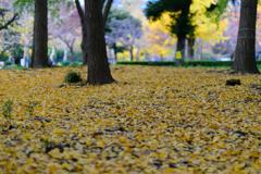 初冬の中の秋1