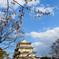 亥鼻城の桜1