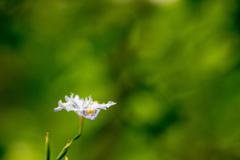 大和路で見つけた花4
