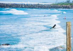 潮風と小鳥