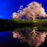 水鏡の一本桜